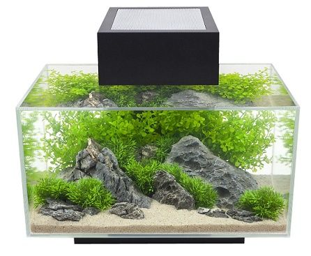 6-Gallon betta fish tank