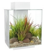 Fluval Edge Aquarium review
