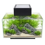 Fluval Edge 6-Gallon Aquarium review