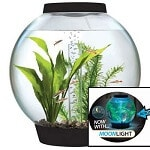 biOrb Classic 15 4-Gallon Aquarium review