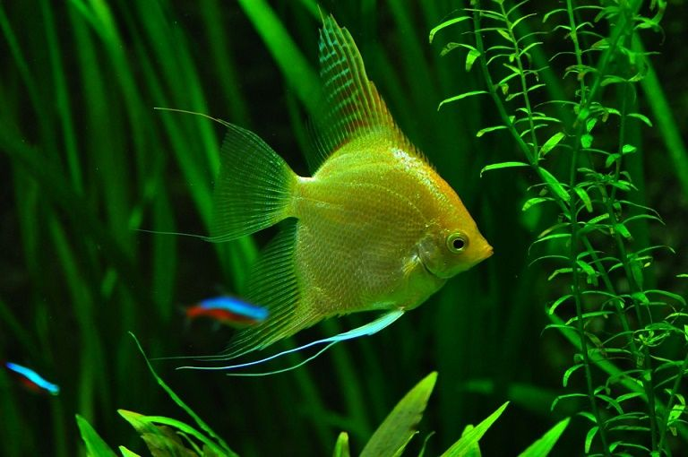 Aquarium Maintenance & Care