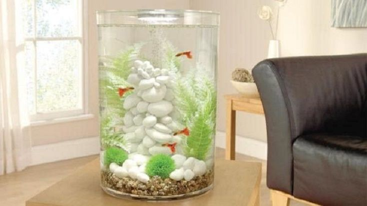 Biube fish tank Review and buying guide